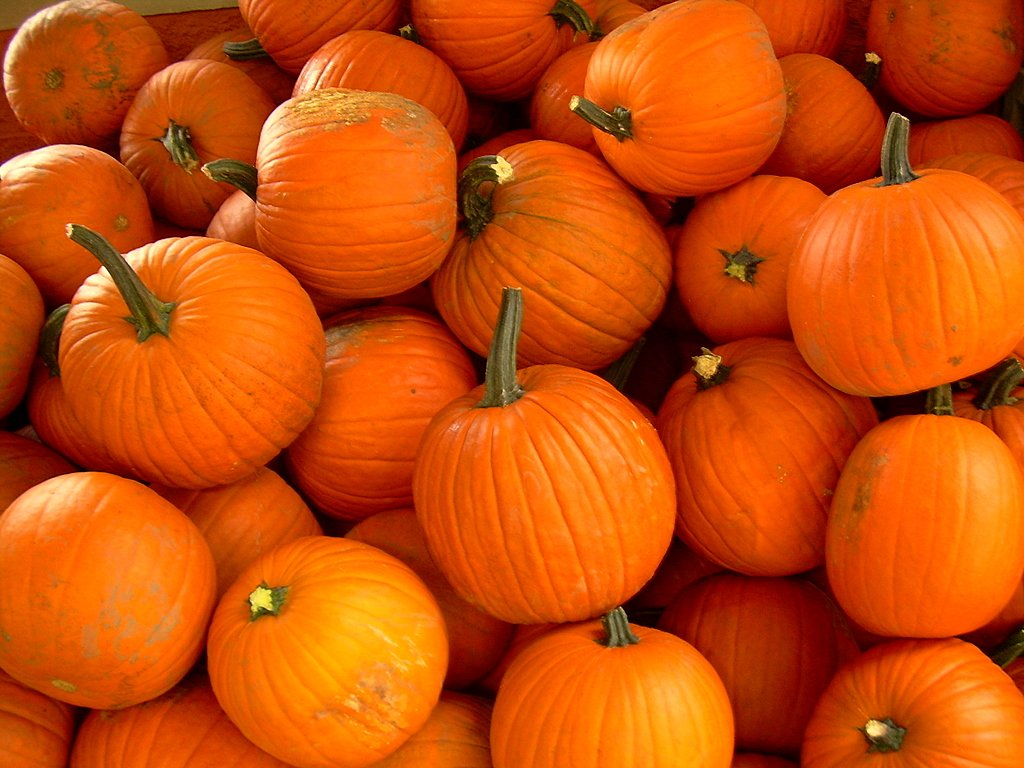 Pumpkin And Apple Picking Long Island