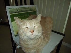 Ginger the cat likes Elana's Pantry