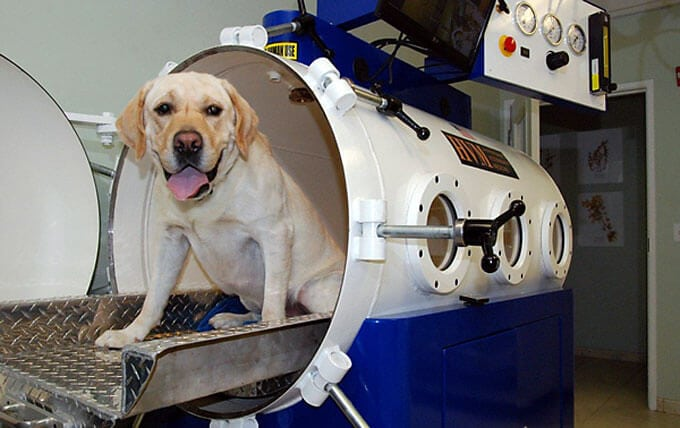 Hyperbaric Oxygen Therapty Chamber Dog