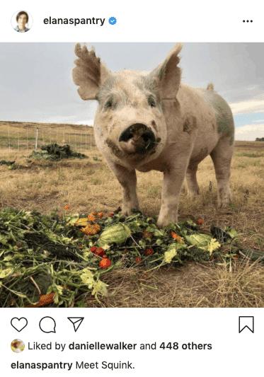 Squink Farm Happy